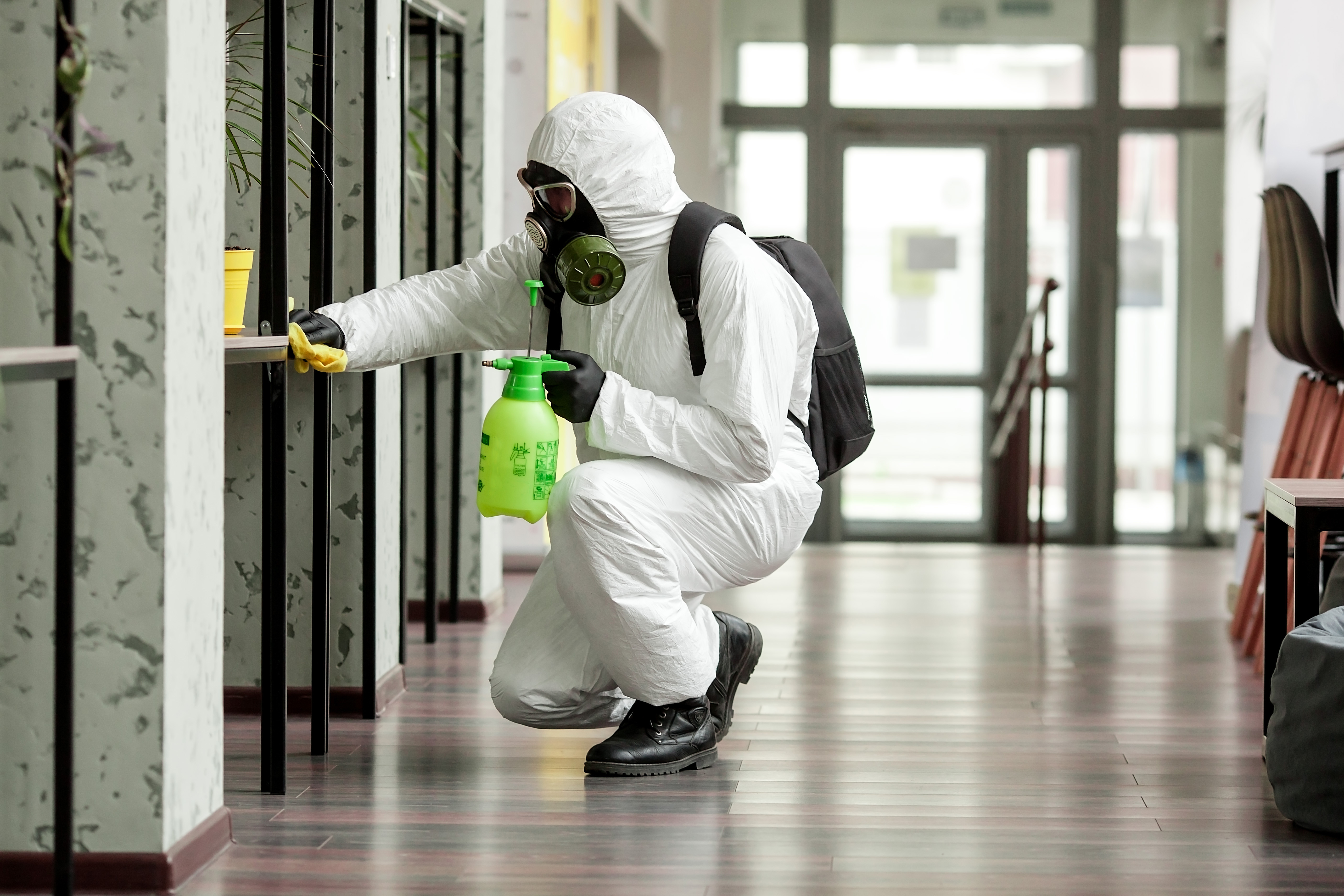 professional staff disinfecting workplace